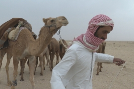'There's no rain': Climate change threatens Iraq's Bedouins