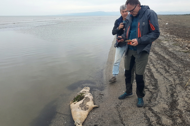 The seal population of the Caspian Sea has for decades suffered from overhunting and the effects of industrial pollution [Marine Mammal Research and Expedition Center/AFP]