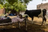 Roshan Lal, 48, a villager with difficulty breathing, rests in a cot as he receives treatment at a makeshift open-air clinic, amidst the spread of the coronavirus disease, in Mewla Gopalgarh, Jewar district, Uttar Pradesh. [Danish Siddiqui/Reuters]