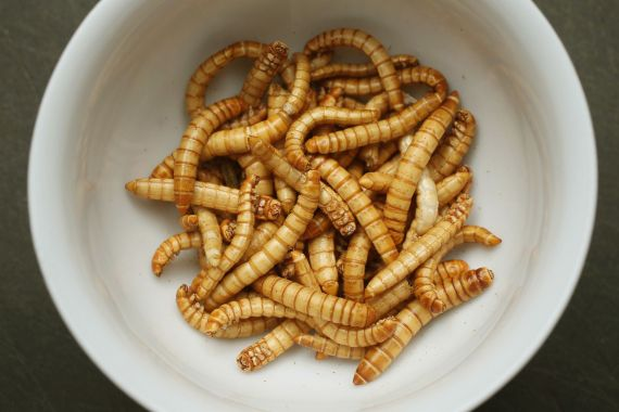 An increasing numbers of advocates worldwide are promoting insects as a viable source of food for humans, citing the high protein value, abundance and low cost. This dish features dried mealworms seasoned with cinnamon, coriander, pepper and other spices [File: Sean Gallup/Getty Images]