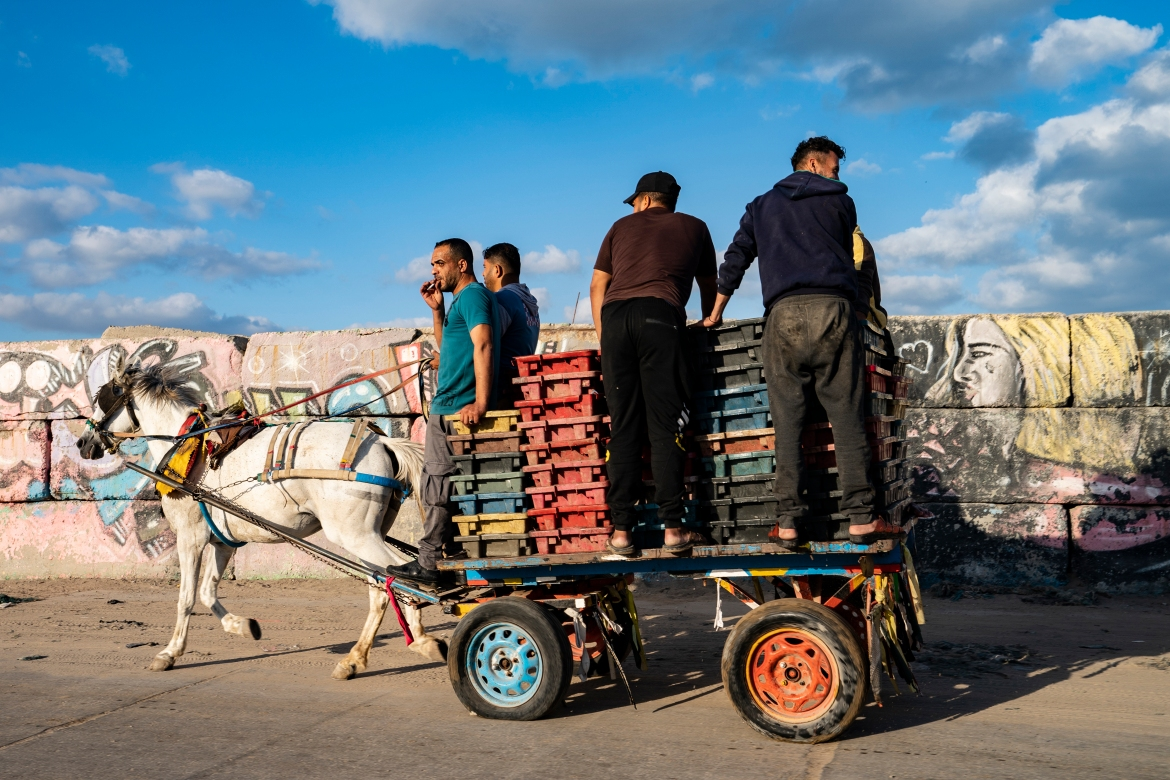The day's haul is delivered to market by a horse-drawn cart in Gaza City. [John Minchillo/AP Photo]