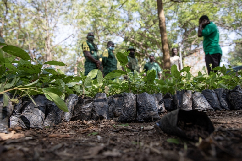 Five million trees were due to be planted across Ghana as part of a massive government-led 'Green Ghana' programme to save depleting forest reserves [Nipah Dennis/AFP]