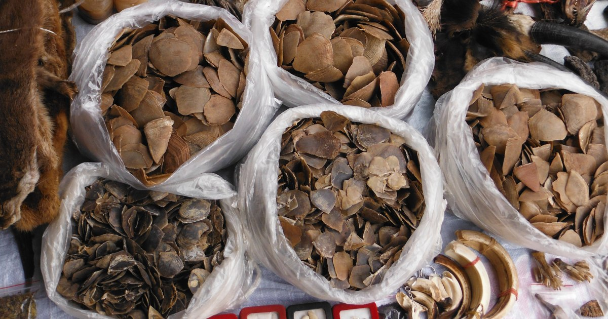 Bear paws, pangolin scales: Wildlife trade flourishing in Mekong
