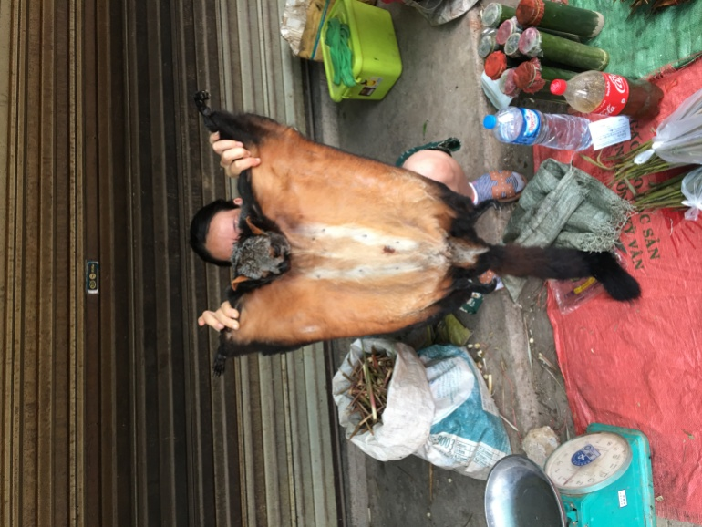 Laotian Giant Flying Squirrel in a market in Muang Sing, Laos [Courtesy of Agkillah Maniam/TRAFFIC]