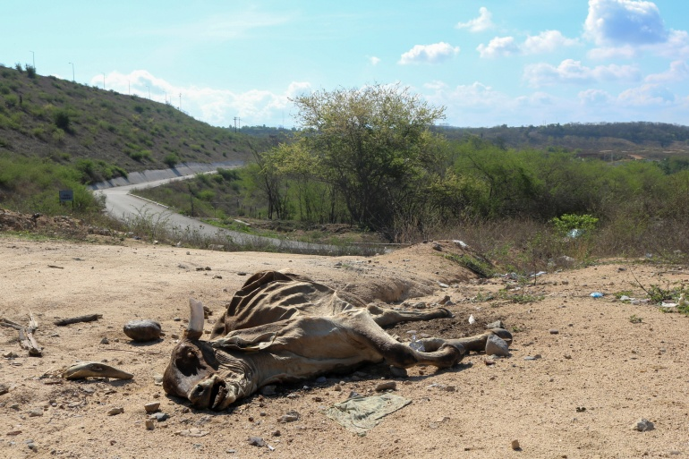 The carcass of a cow is seen on July 1 near the Sanalona reservoir in Mexico, which has low water levels due to a long-term drought across two-thirds of the nation [Jesus Bustamante/Reuters]