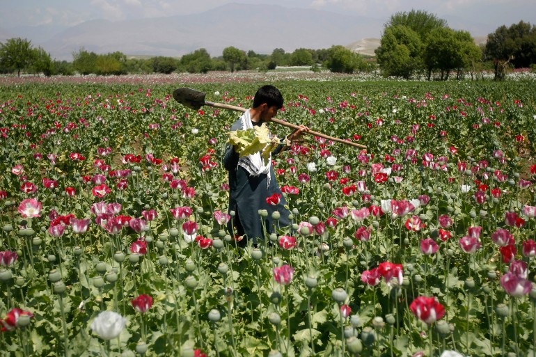 More than 80 percent of global opium and heroin come from Afghanistan [File: Parwiz/Reuters]