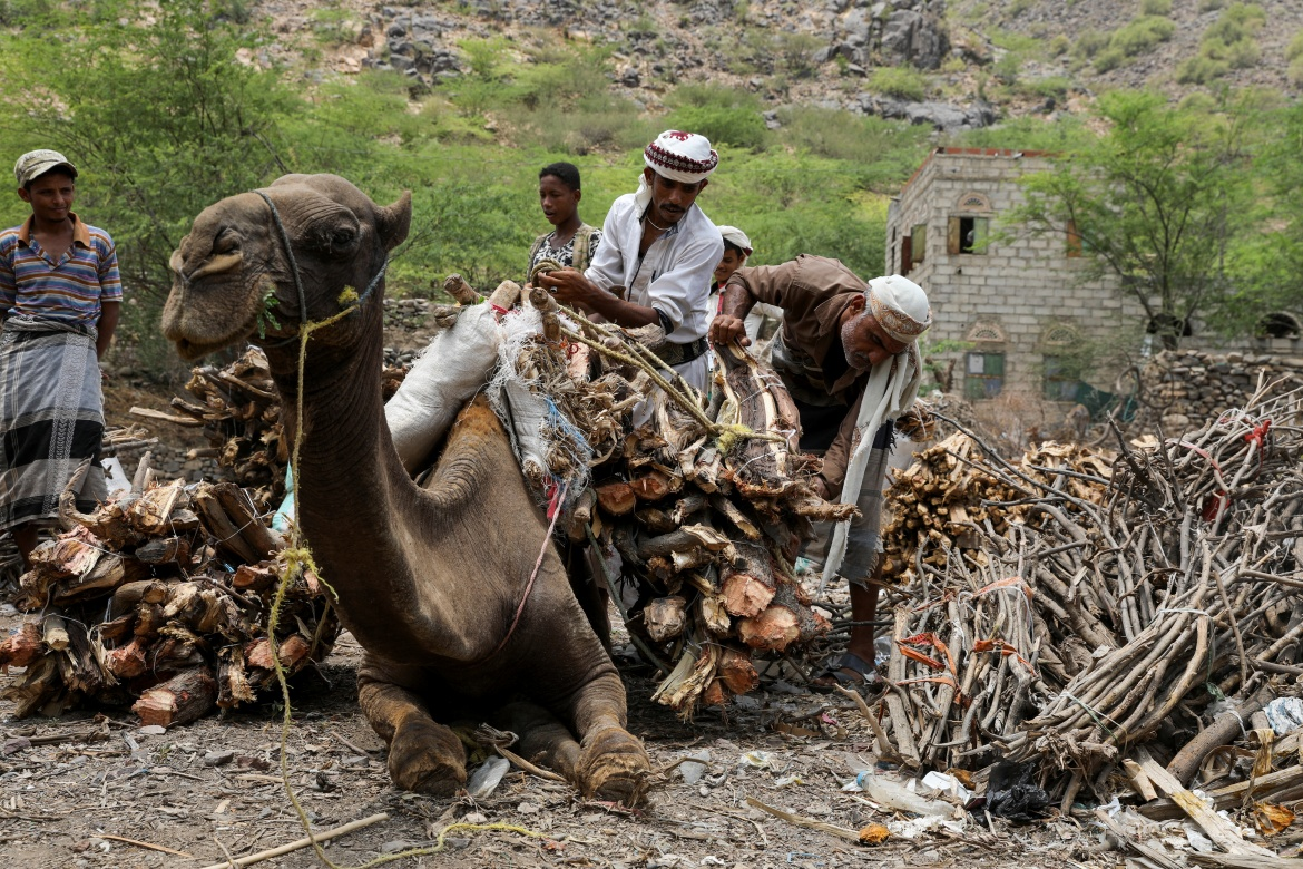 Vendors unload firewood bundles from the back of a camel at a market in Khamis Banisaad district. [Khaled Abdullah/Reuters]