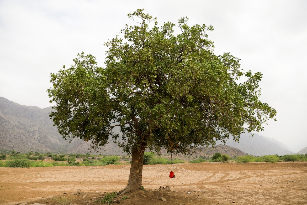 Free drinking water is hung on a tree in Khamis Banisaad district. 'We are scared the country will become a desert, it is already happening ... you no longer see the trees that once covered the mountains,' said logger Sulaiman Jubran. [Khaled Abdullah/Reuters]