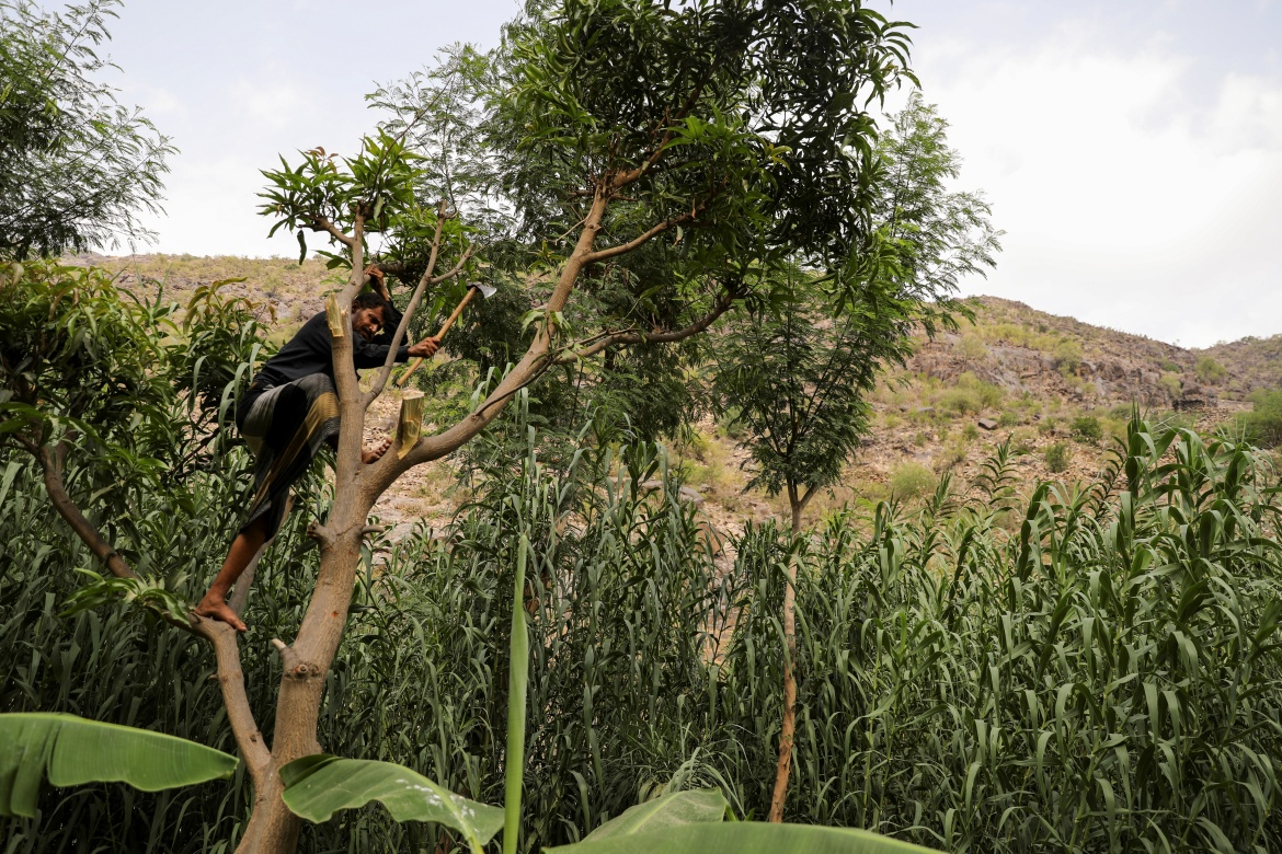 Sulaiman Jubran uses an axe to cut a tree in Khamis Banisaad district. 'Demand depends on the number of fuel ships that make it to Hodeidah port. These days it (demand) is very high,' said Jubran, who scratches a living selling firewood to visiting traders. [Khaled Abdullah/Reuters]
