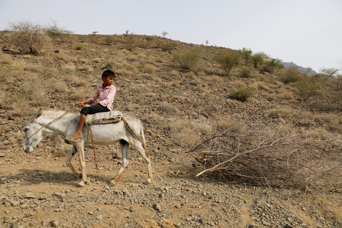 A boy who works as a lumberjack, rides a donkey as it drags felled branches in Bajil district. [Khaled Abdullah/Reuters]