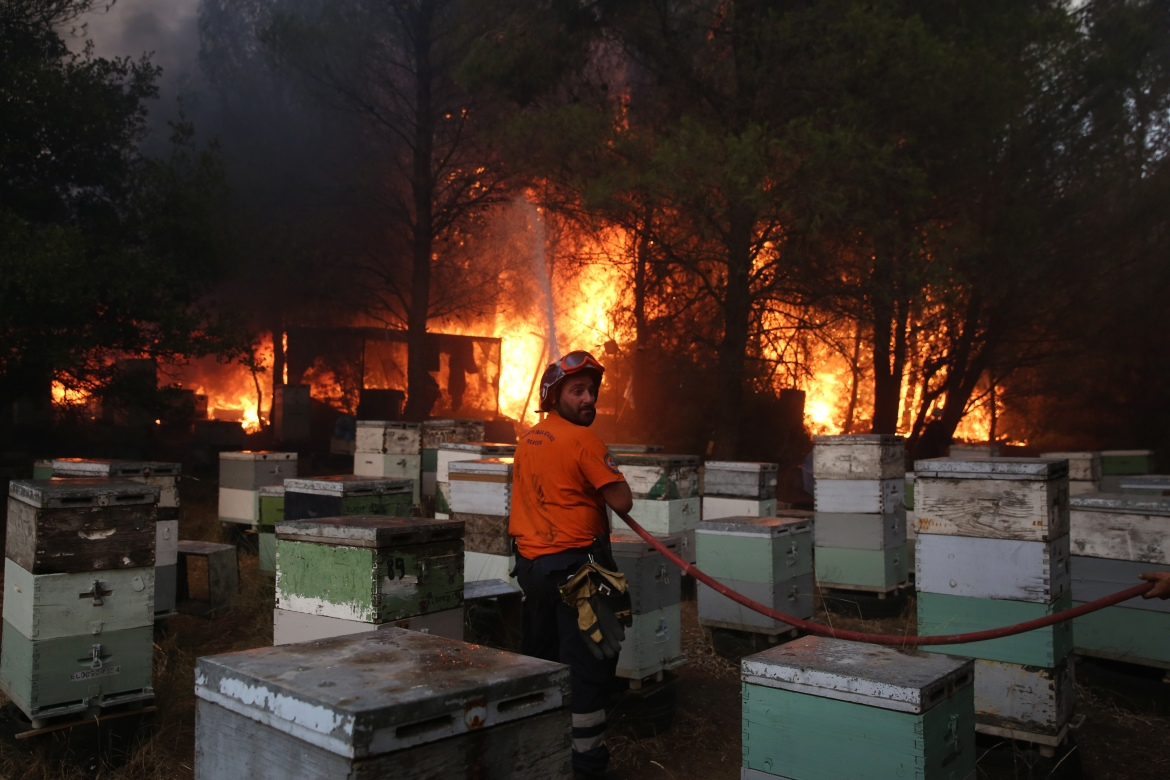 A fireman, standing among beehives, battles to extinguish a wildfire in the area of Varympompi. [Orestis Panagiotou/EPA]