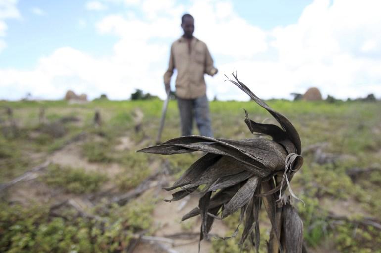 A Zimbabwean farmer walks through his maize field outside Harare [File: Philimon Bulawayo/Reuters]