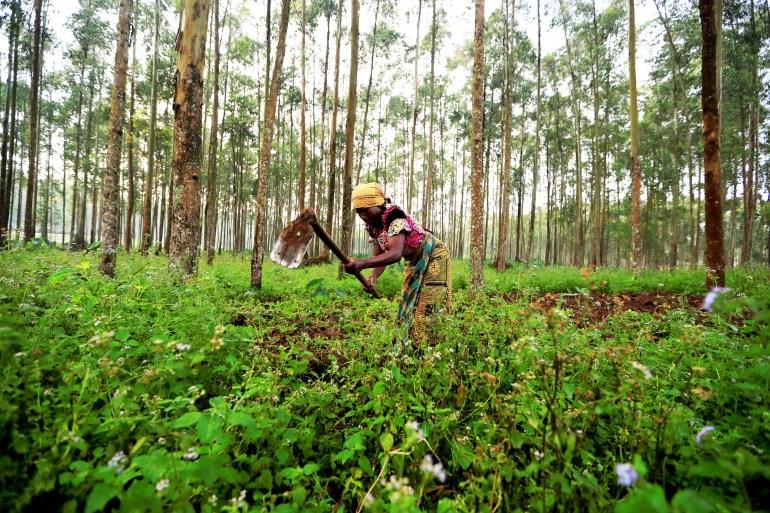 Farmer Nzyava, 49, works on her land in Katwa, near Butembo, in the Democratic Republic of Congo on October 5, 2019 [File: Reuters/Zohra Bensemra]