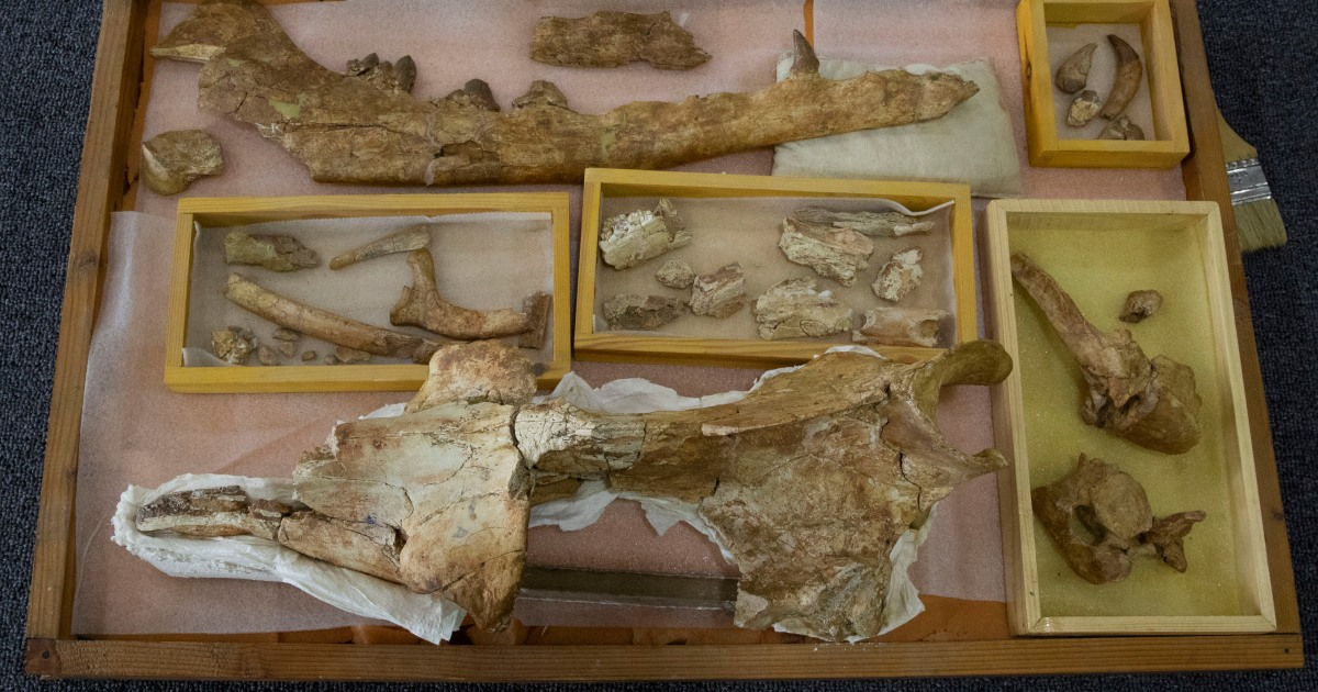 Fossil of land-roaming whale species found in Egypt - Al Jazeera English