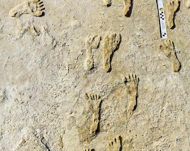 Oldest human footprints in North America found in New Mexico - Al Jazeera English