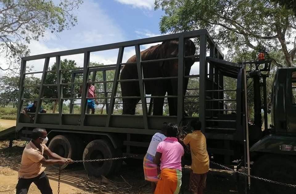 Anger as Sri Lanka court returns elephants to alleged traffickers - aljazeera