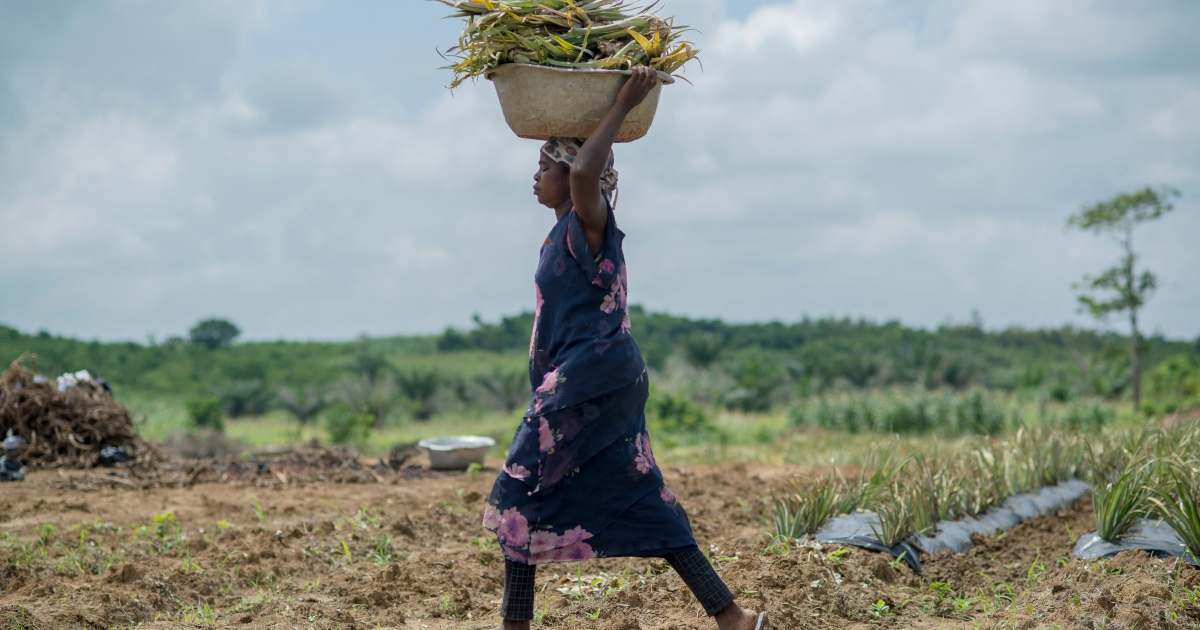 , African agriculture without African farmers, The World Live Breaking News Coverage & Updates IN ENGLISH
