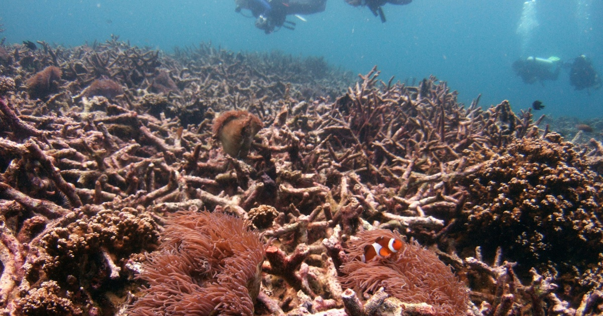 14% World's Coral Reefs is Damaged Due to Climate Change in 10 years
