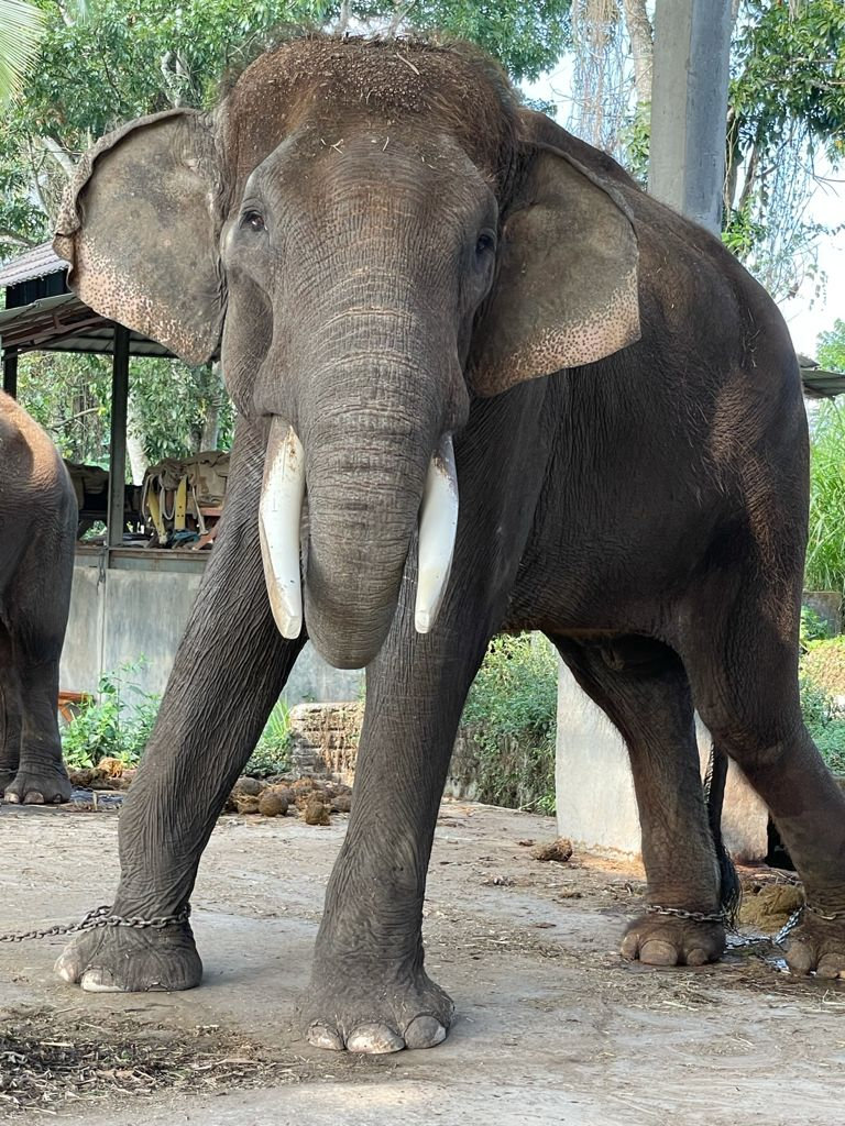 """Elephants at BEC were found to be just """"skin and bones"""" after the coronavirus pandemic forced the park to close"""